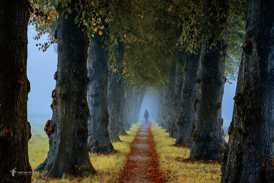 Among Friends by Lars van de Goor on 500px.com