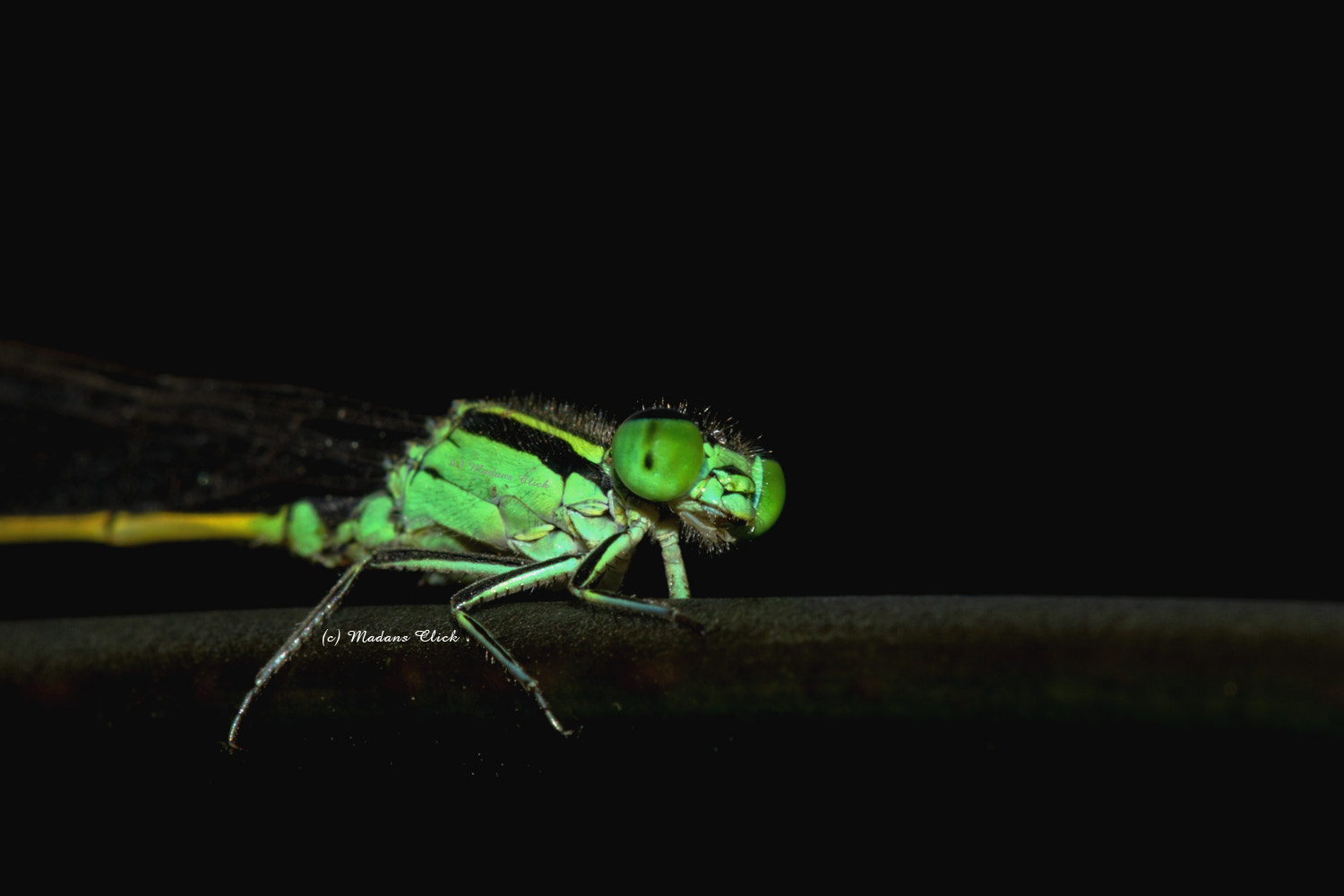 Photograph Damsel Fly by Madan GC on 500px