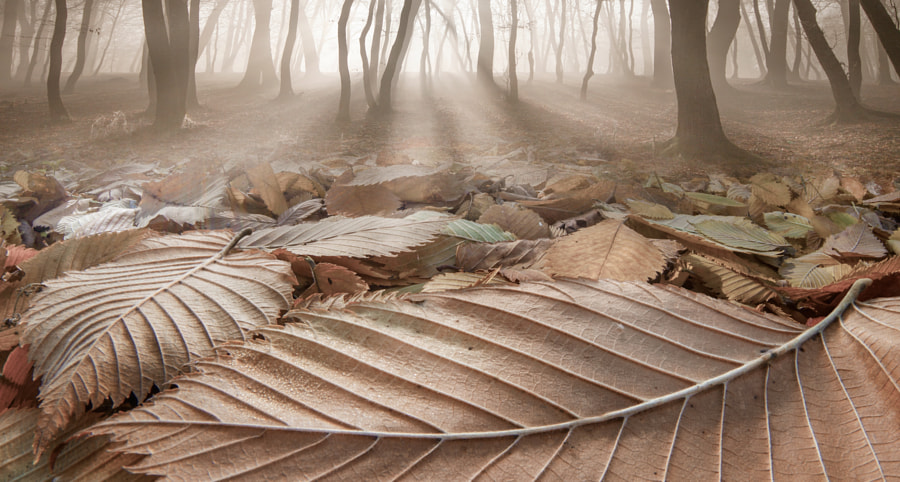 The Fallen Ones II by Adrian Borda on 500px.com
