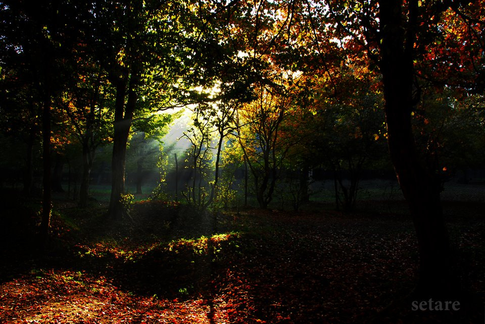 Photograph Sunset in autumn by Setare Motazedi on 500px