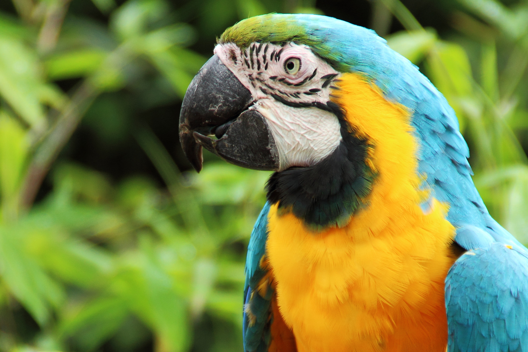 Photograph Parrot by M R on 500px