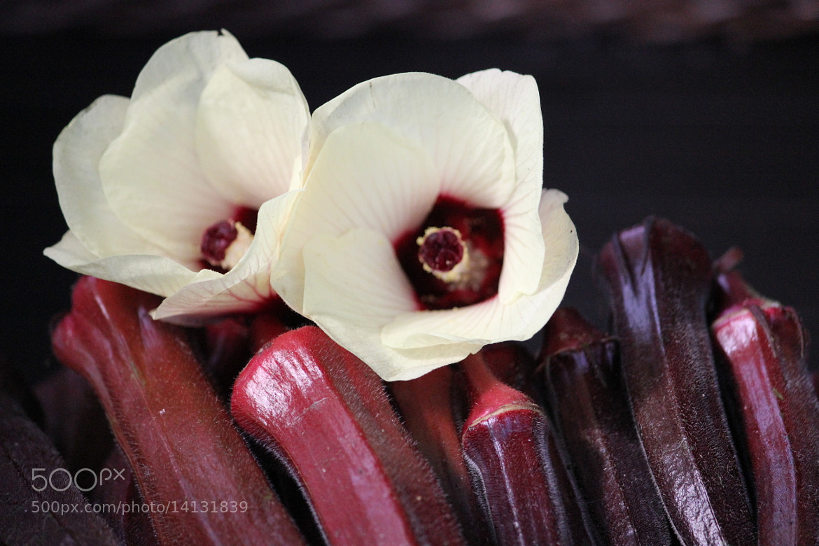 Photograph crimson-4 by Mary Fontenot on 500px