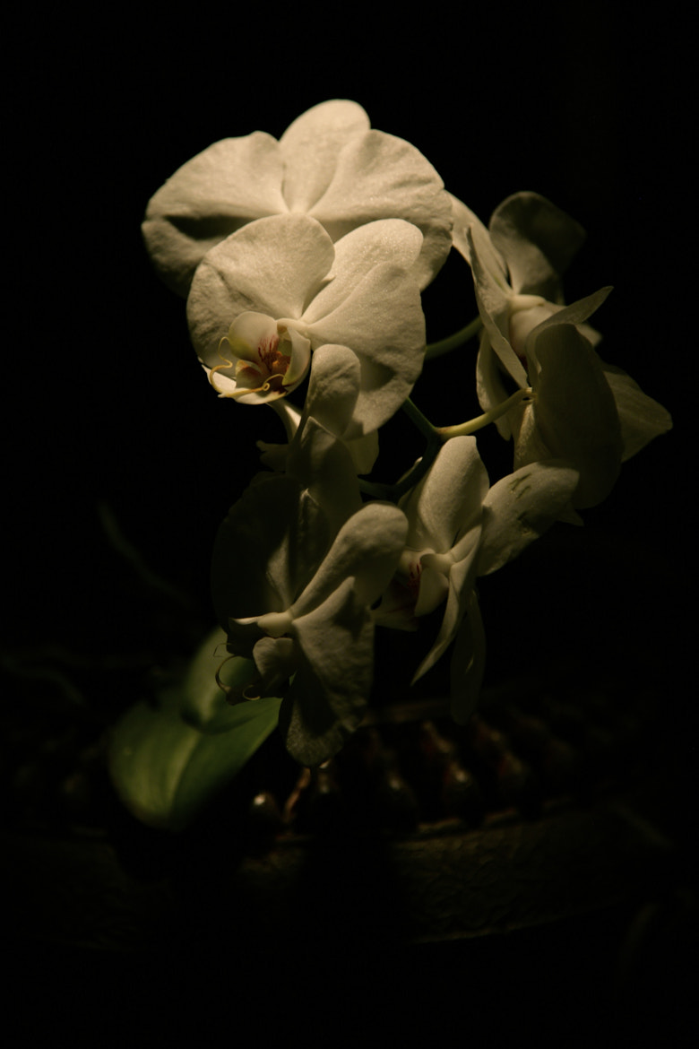 Photograph mourning by Irene S i r n a on 500px