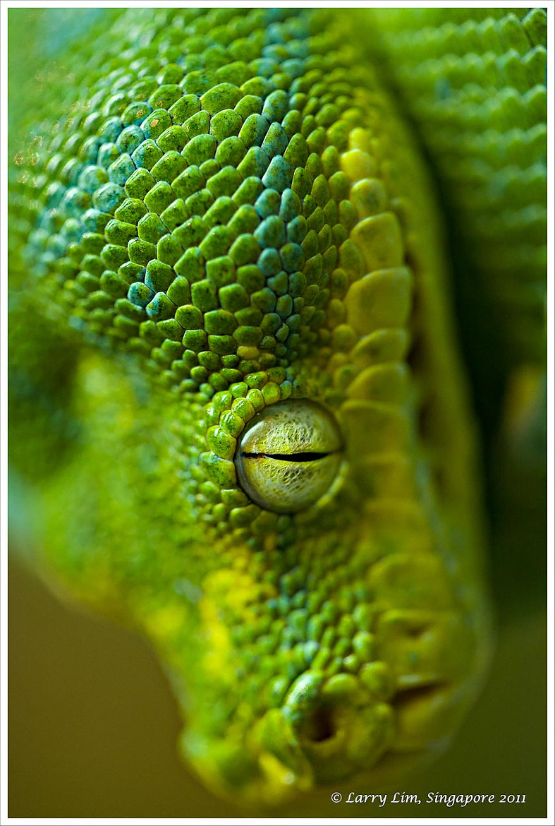 Photograph Evil Eye by Larry Lim on 500px