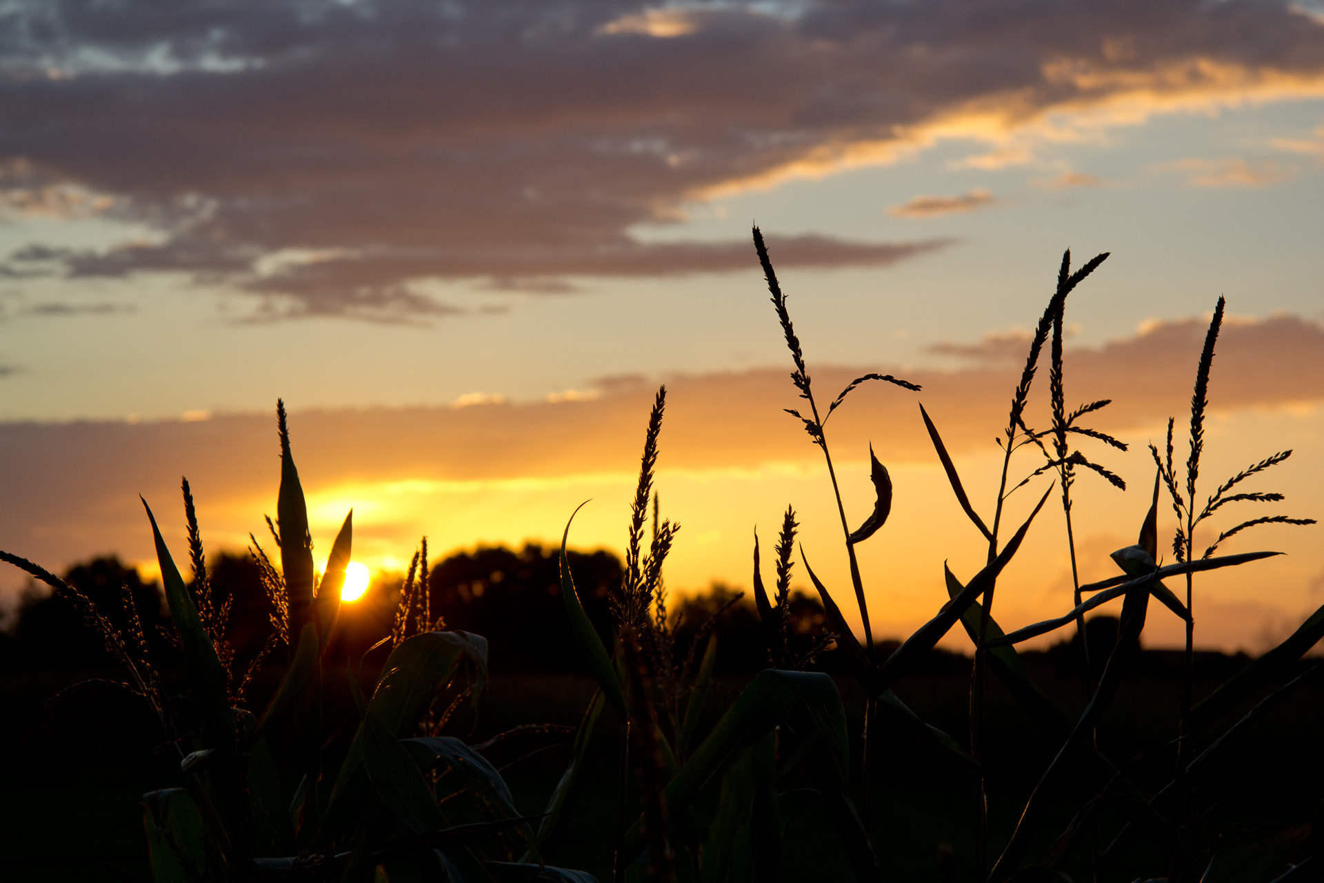Photograph Sunset Corn by Denis Caeyers on 500px