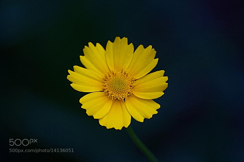 Photograph .. flower power .. by Ankur Gupta on 500px