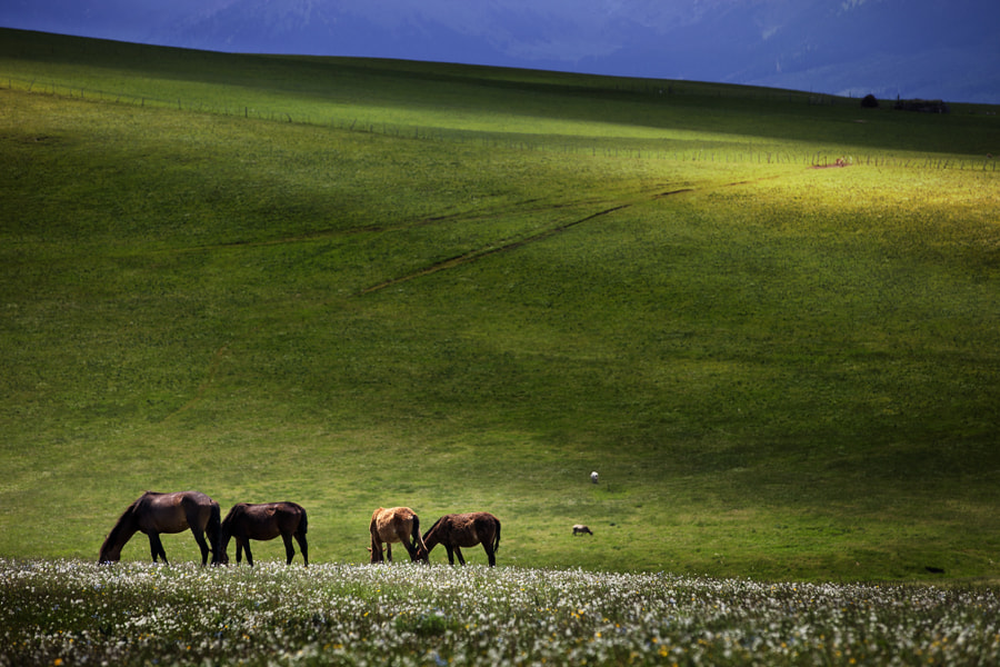 Photograph Road to Tien Shan, China by Jay Spy on 500px
