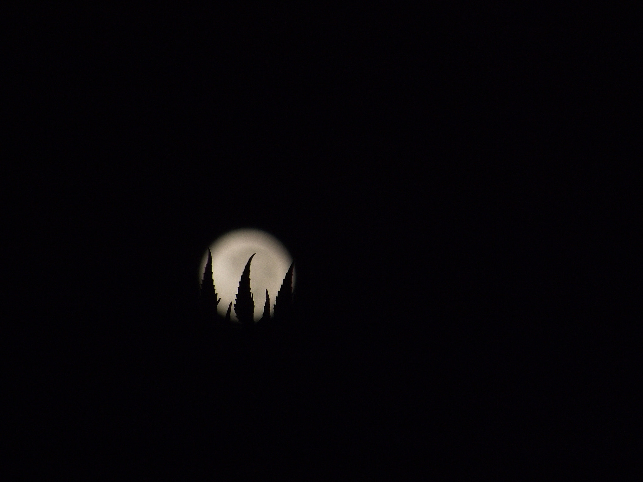 Photograph Moon Silhouette by Pavan Parikh on 500px