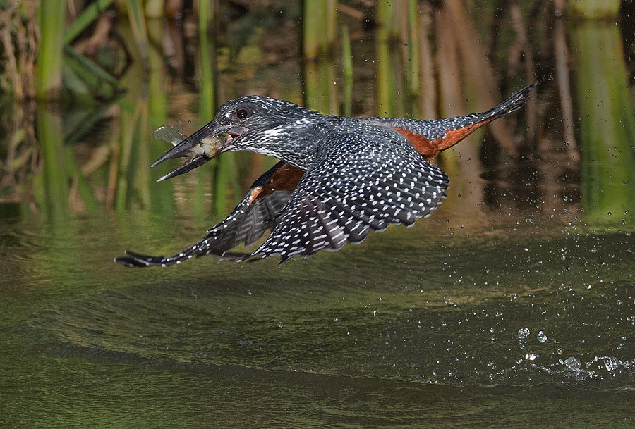 Photograph Splash and catch by Francois Retief on 500px