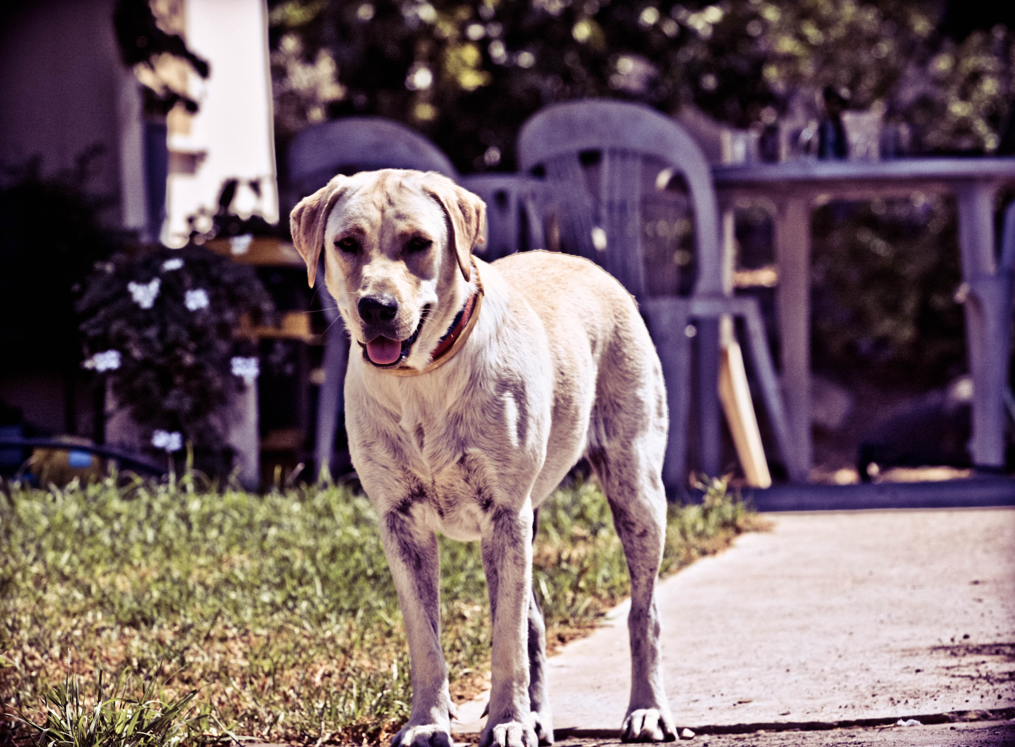 Photograph Just A DoG by Shay Bar on 500px