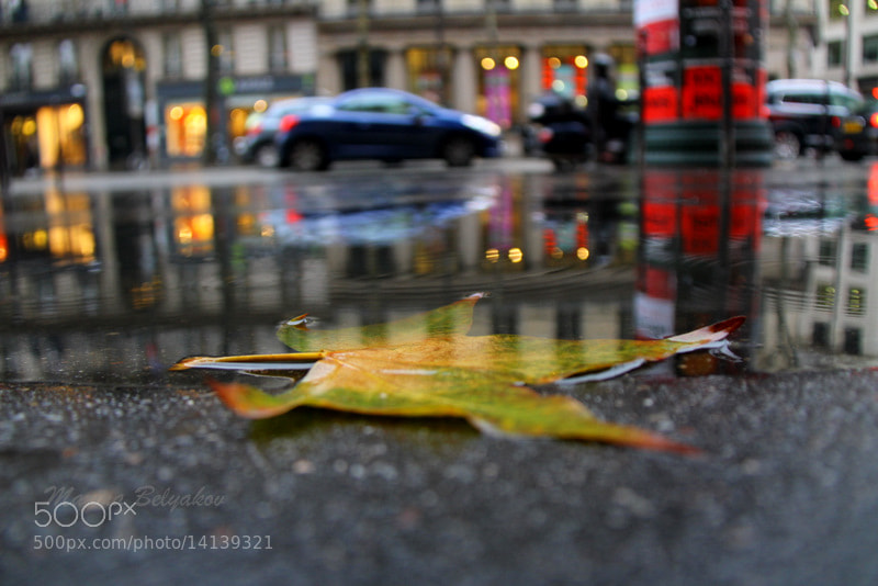 Photograph autumn by Marina Belyakov on 500px