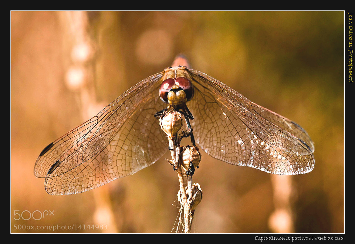 Photograph Espiadimonis pati by Joan Oliveras on 500px