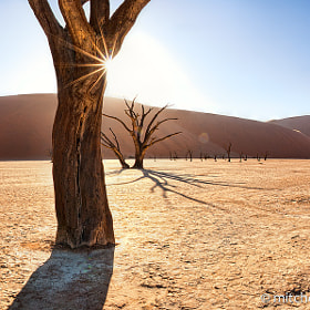 Deadvlei, Namibia Sunrise | Landscape Photography by Mitchell Krog (MitchellKrog)) on 500px.com