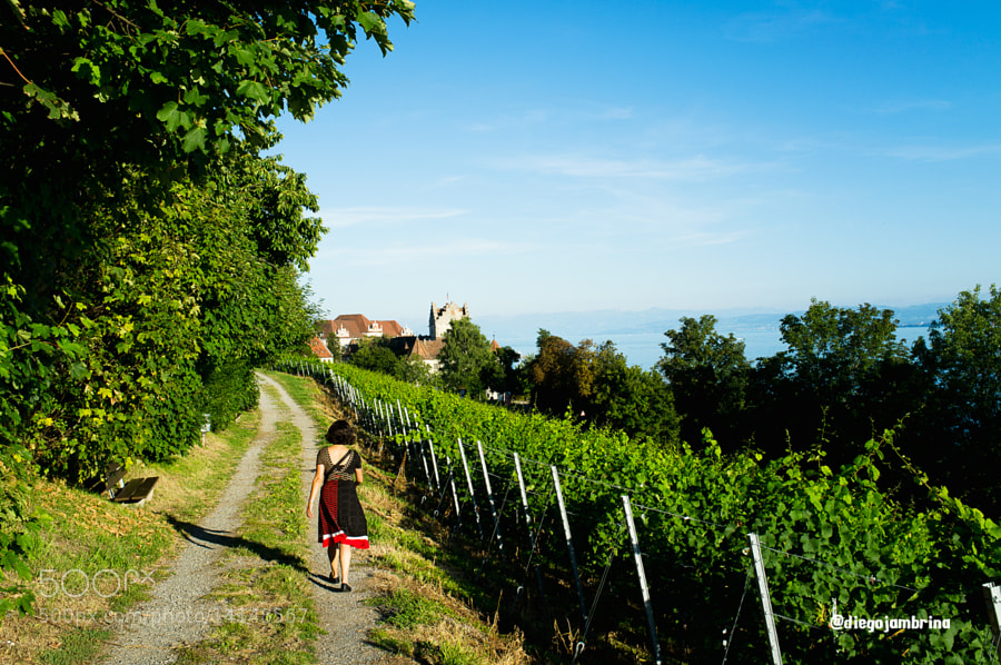 Paseando entre viñedos en Meersburg by Diego Jambrina (Elhombredemackintosh) on 500px.com