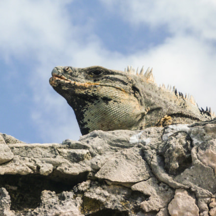 Iguana rock, Panasonic DMC-TS1