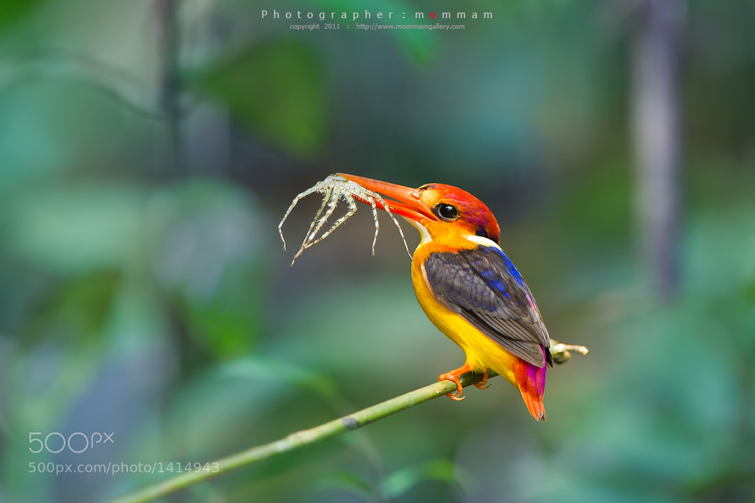 Photograph Hungry by mommam 777 on 500px