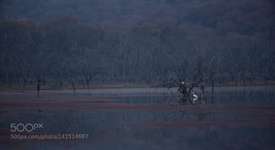 Magical Landscape, Canon EOS 5D MARK II, Canon EF 200-400mm f/4L IS USM