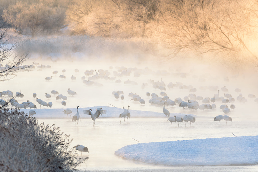 Frozen morning by Hidetoshi Kikuchi on 500px.com