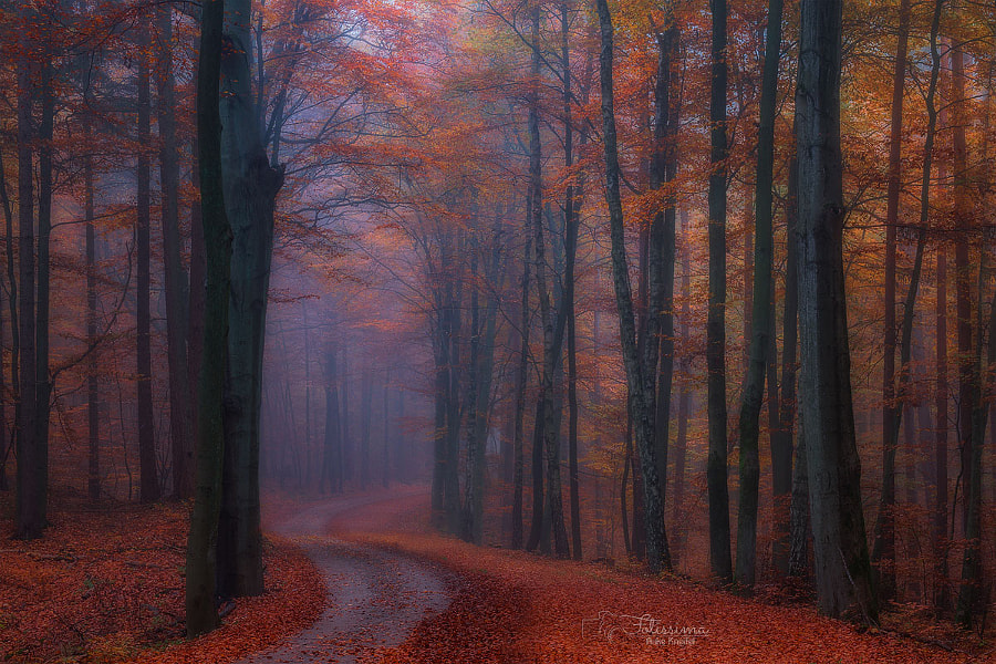 colorful by Anke Kneifel on 500px.com