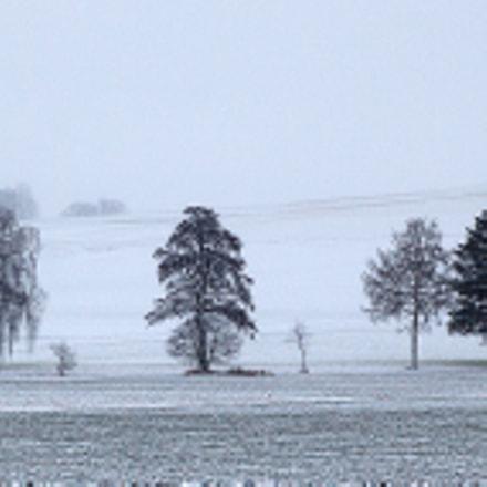 Einsame Bäume