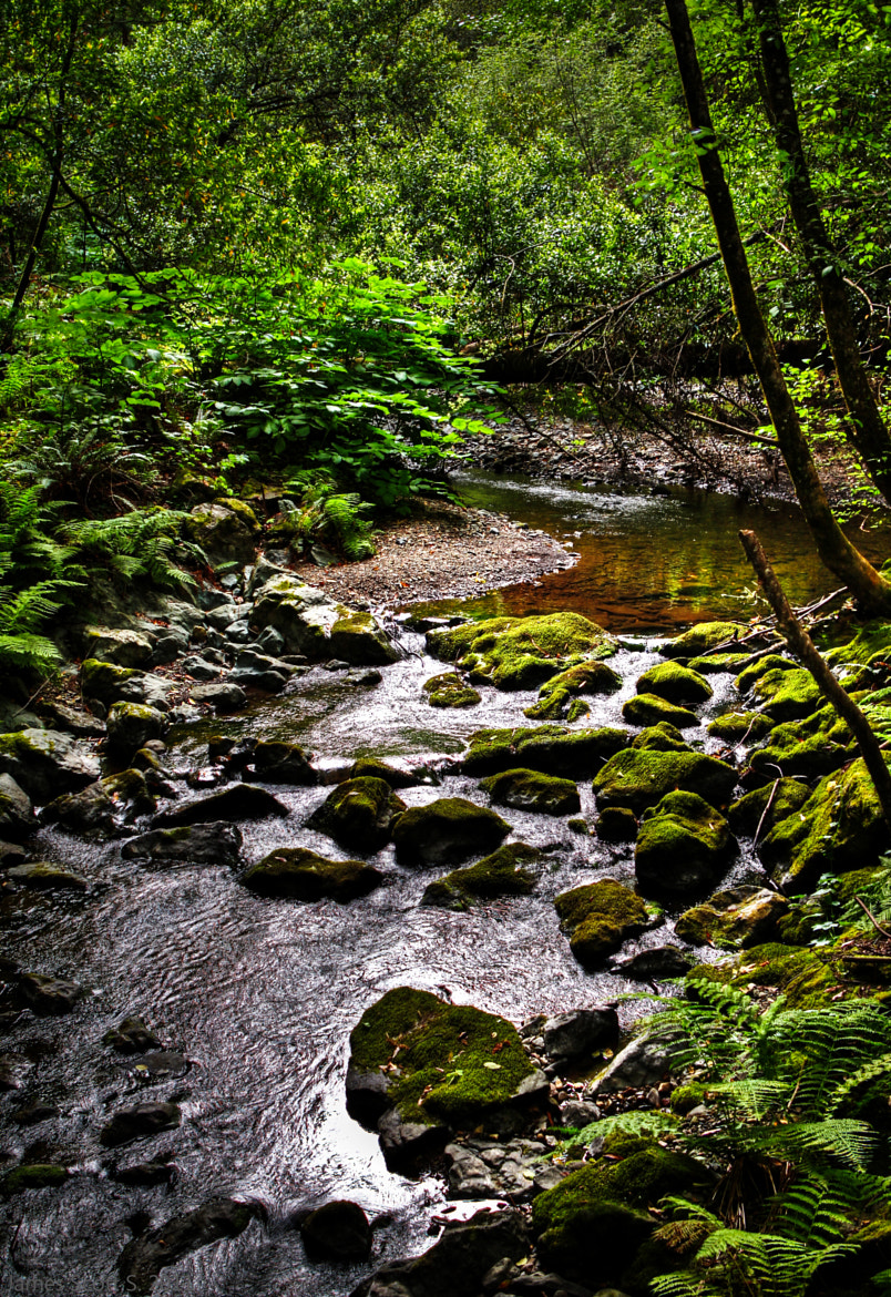 Photograph Green Stream - Muir Woods by James S on 500px