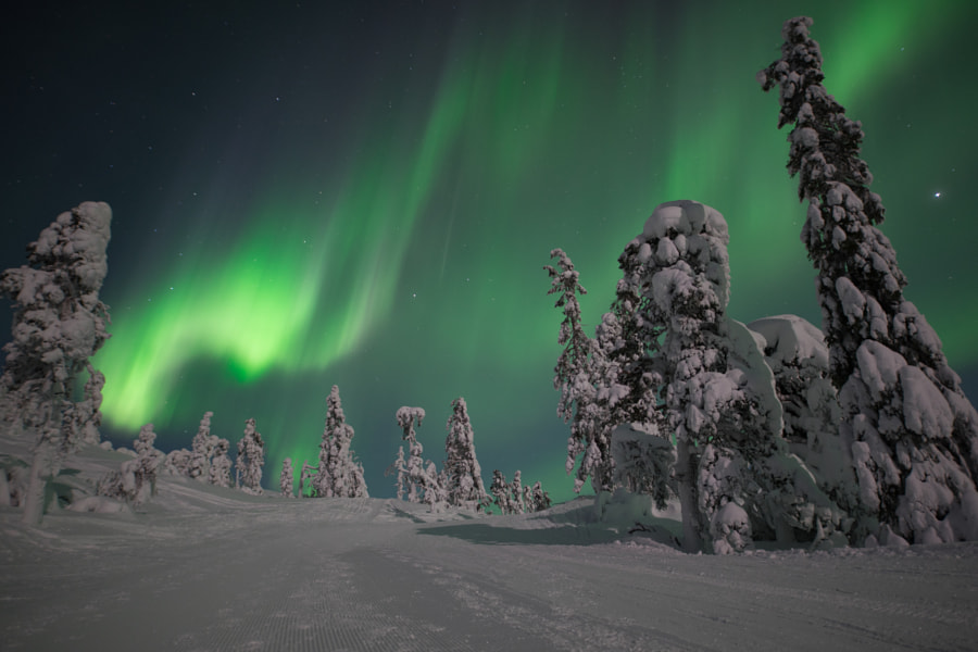 Aurora Borealis in the Forest by Simon Inniger on 500px.com
