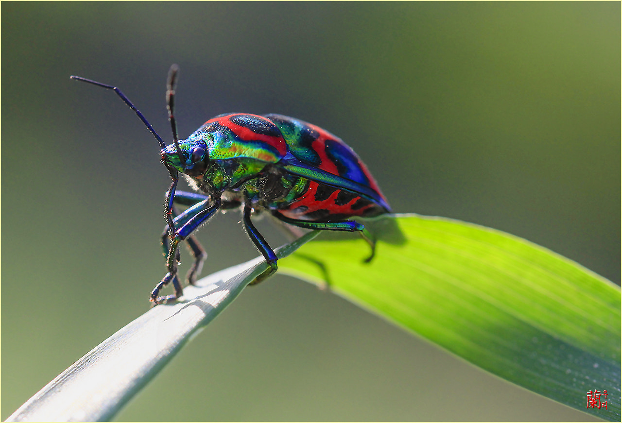 Photograph Big clown bug by sung  hoon kyoung on 500px