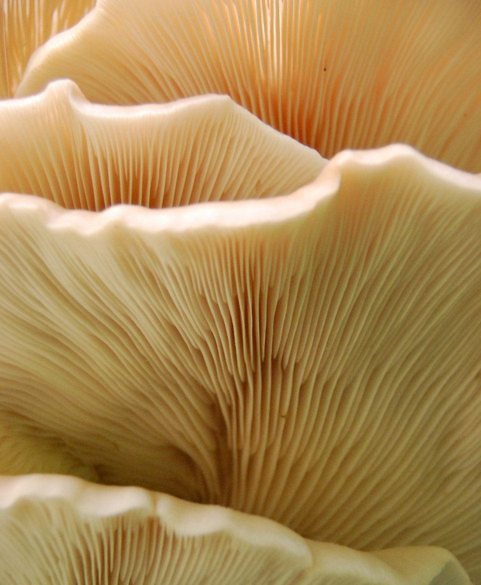 Photograph Abstract Fungus by Steve Retka on 500px