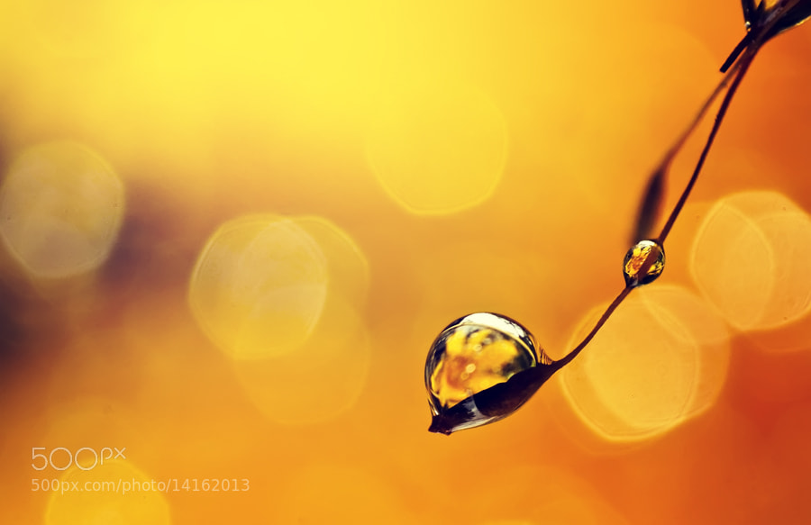Photograph Honey by Dangerouz Yusra on 500px