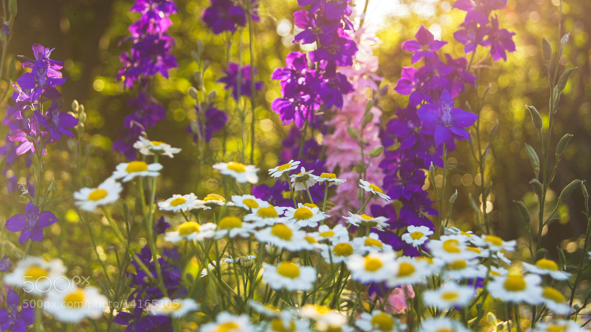 Photograph Memories of Summer by Erik Anderson on 500px