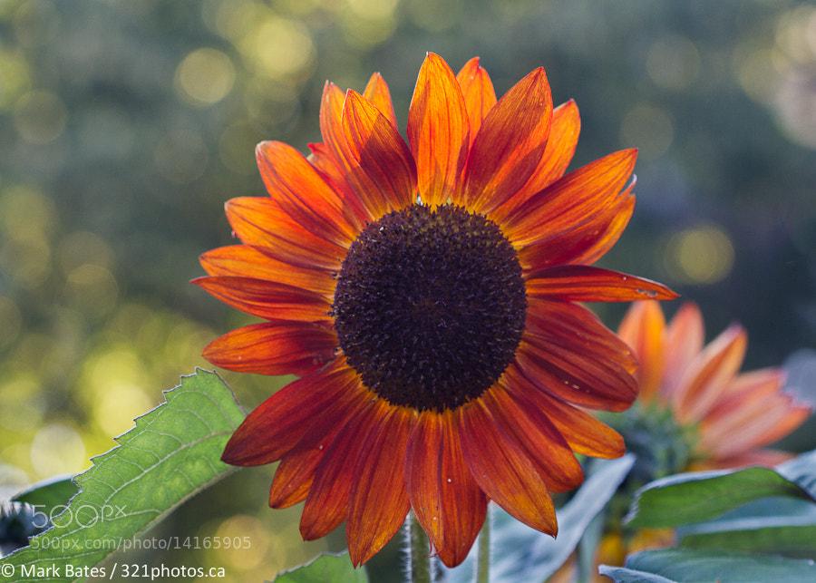 Photograph Sun Splash by Mark Bates on 500px