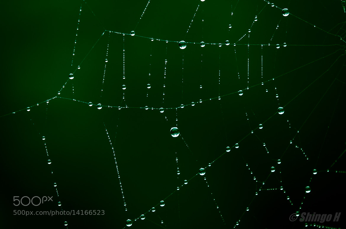 Photograph Spider web by Shingo Hama on 500px
