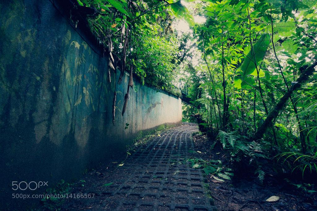Photograph Monteverde, Costa Rica by David Delgado on 500px