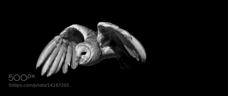 Photograph flying owl by Corinna-Jasmin Kopsch on 500px