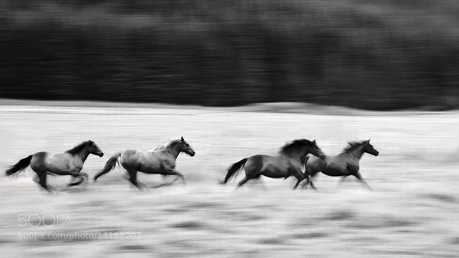 Photograph four horses by Sona Buchelova on 500px