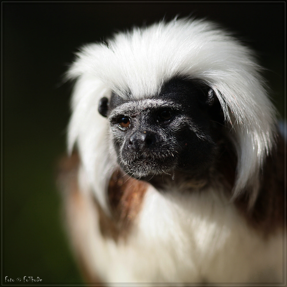 Photograph LisztAffe by Thomas Deter on 500px