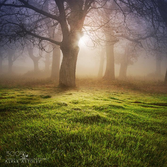Photograph Carpet green by Alvar Astúlez on 500px