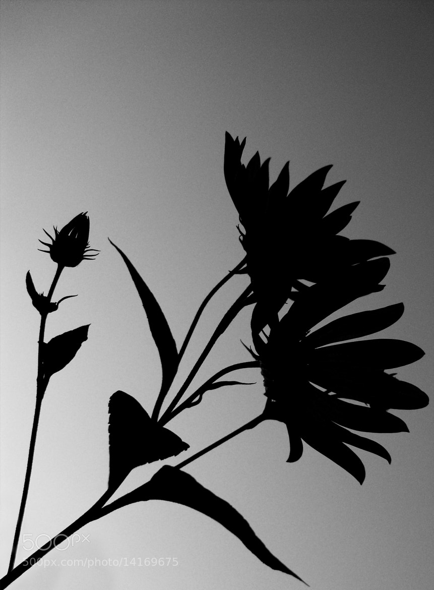 Photograph black flowers by Lejla Tabak on 500px