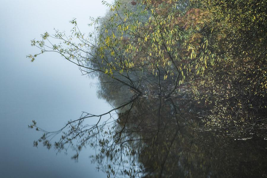 Derwentwater reflection