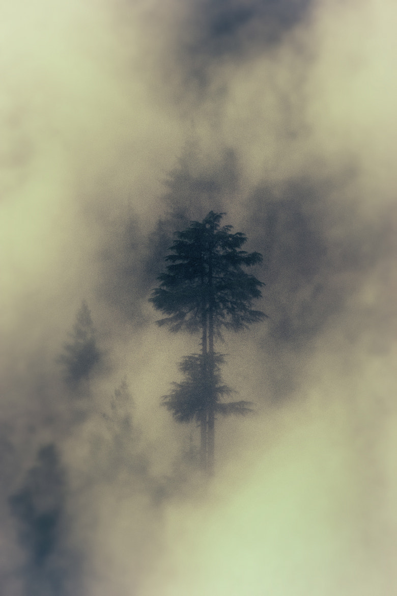 Photograph Ghosts of Nature Past by Rishit Temkar on 500px