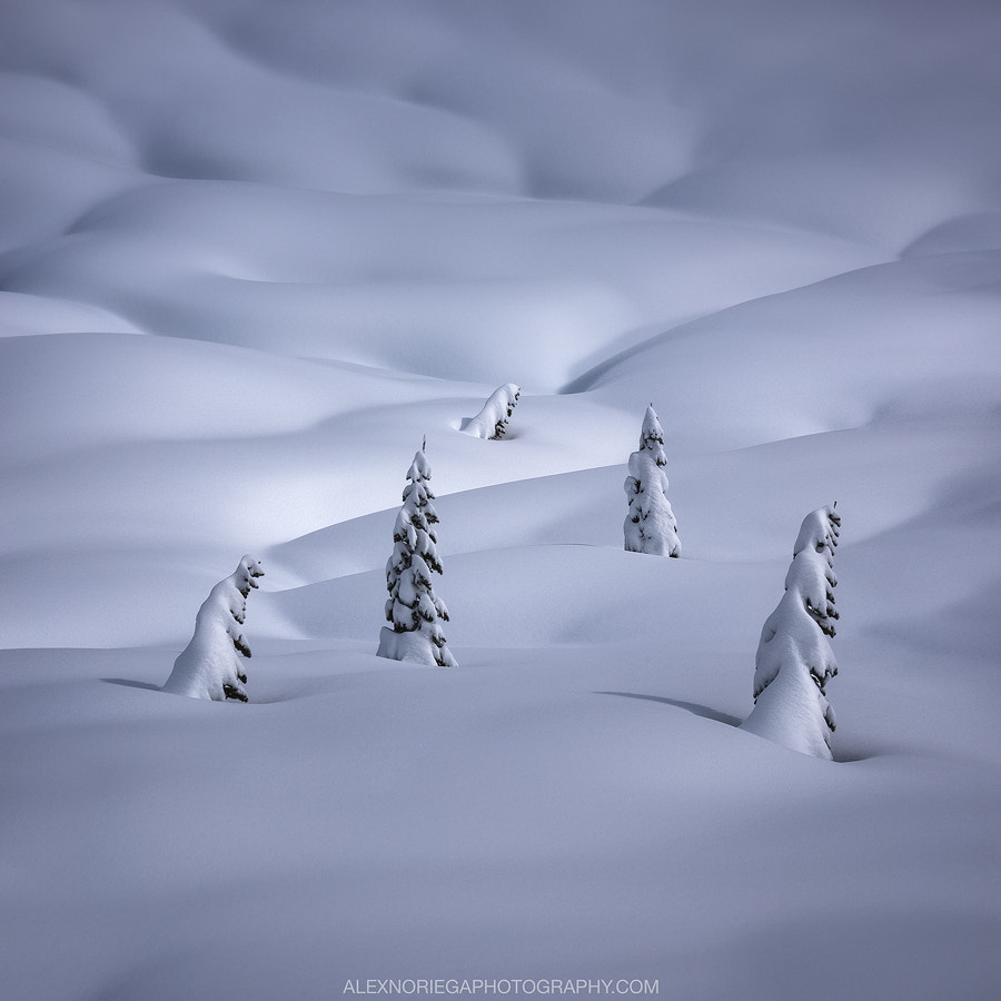 Hibernation by Alex Noriega on 500px.com