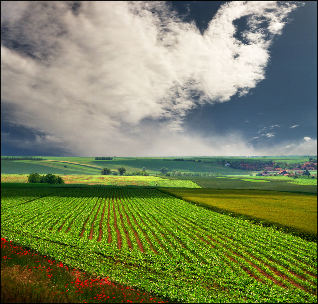 Photograph Summer fields by Katarina Stefanović on 500px