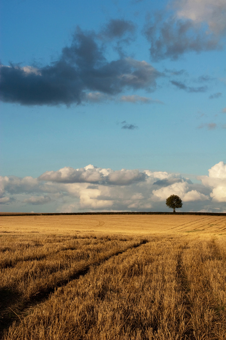 Photograph After the harvesting by Zoritza Williams on 500px