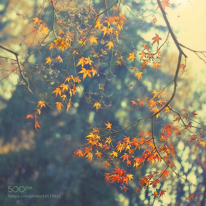 Photograph golden autumn by Yulia Pletinka on 500px