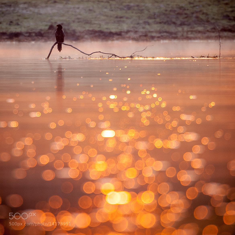 Photograph Morning bird by Gorazd Golob on 500px