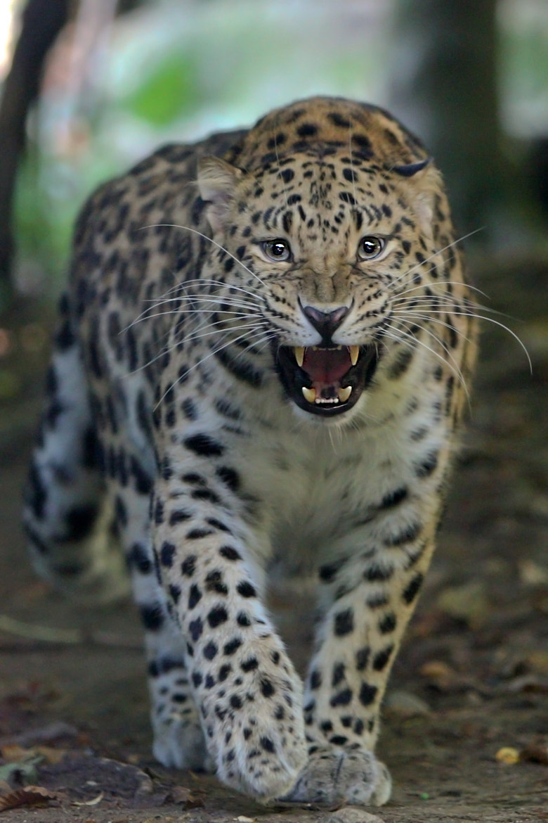Photograph wild look by alberto ossola on 500px