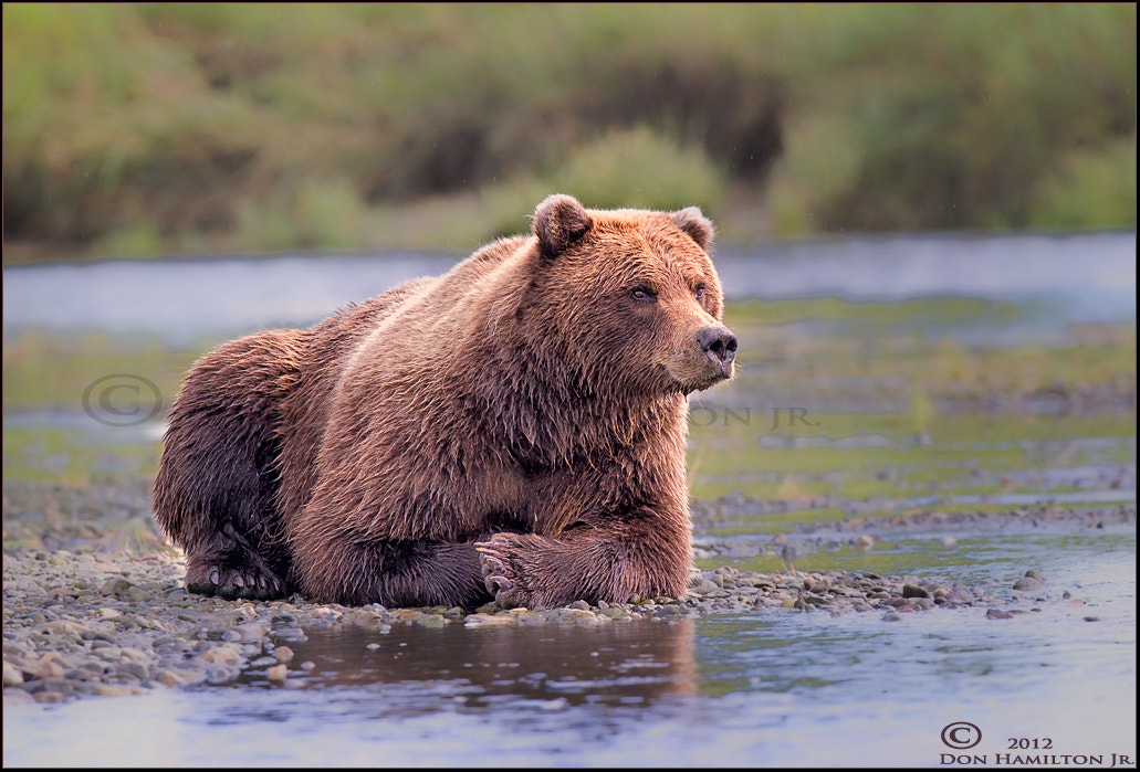 Photograph Patiently Waiting For Salmon!! by Don  Hamilton Jr. on 500px