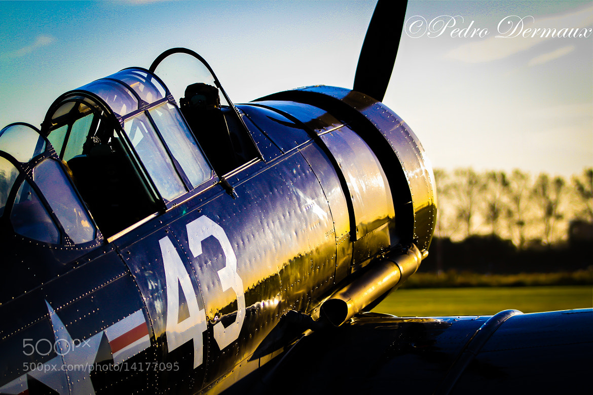 Photograph T6 Texan in evening light by Pedro Dermaux on 500px