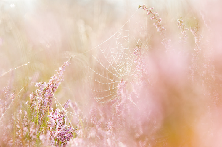 Photograph Morning pastels by Andrea  Gulickx on 500px