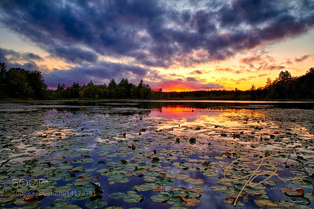 Photograph Lily Pad Sunset by Jeff Sinon on 500px